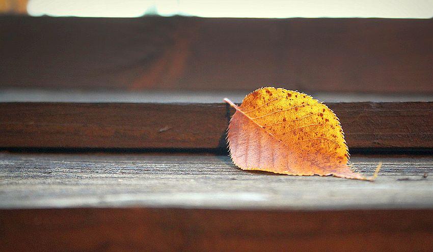 Gardening Tips For Autumn