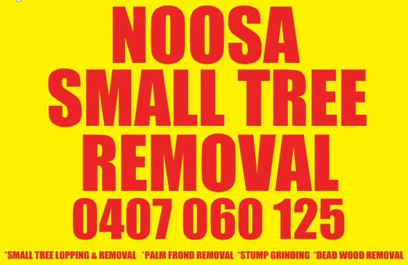 Noosa Small Tree Removal