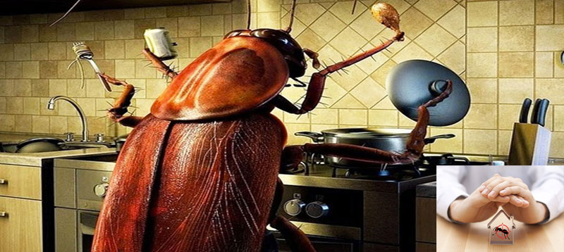 My Home Pest Control