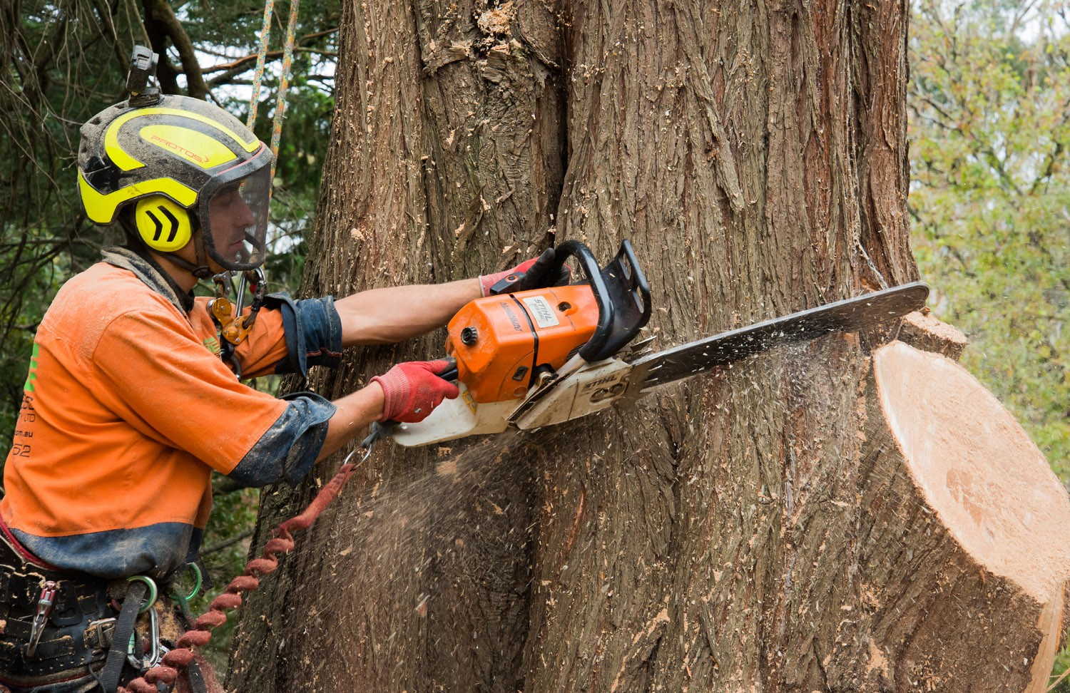 Securing Trees from the Sunscald