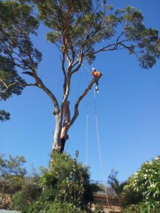Plumb Trees