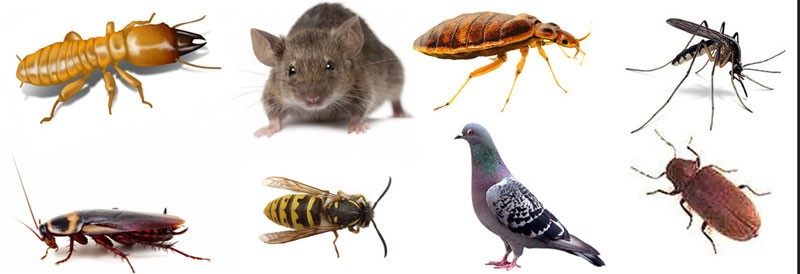Pest Busters
