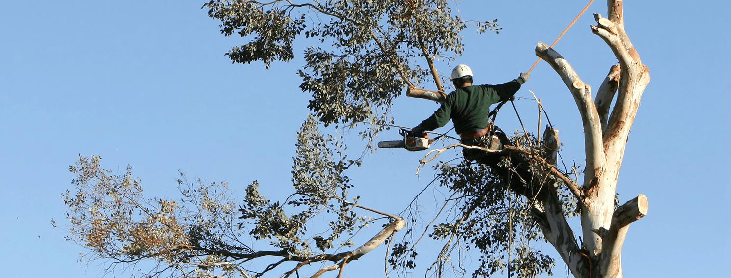 Treestylin: The Tree Specialists