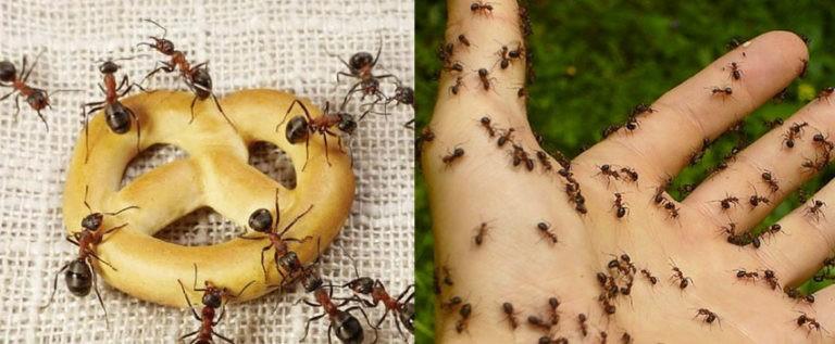 Impressive Pest Control Caboolture