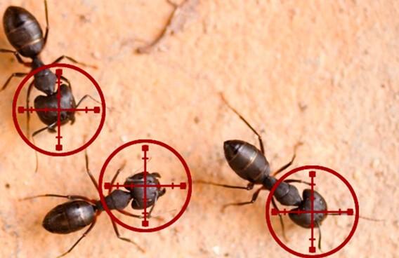 Pest Arrest Australia