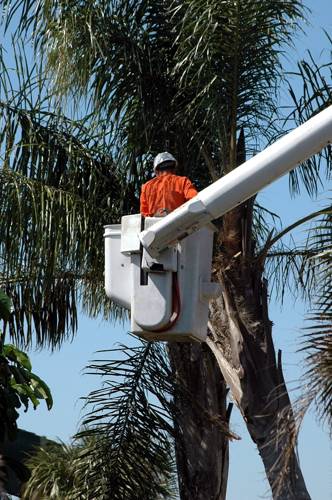 Murray's Tree Services