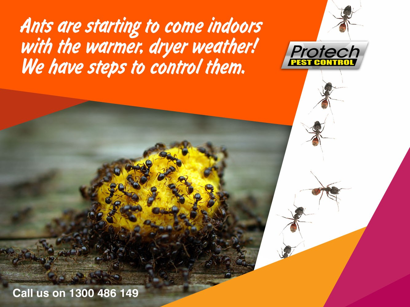 Protech Pest Control
