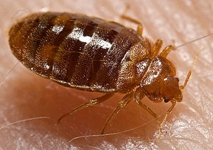 Fast Bed Bug Control Melbourne