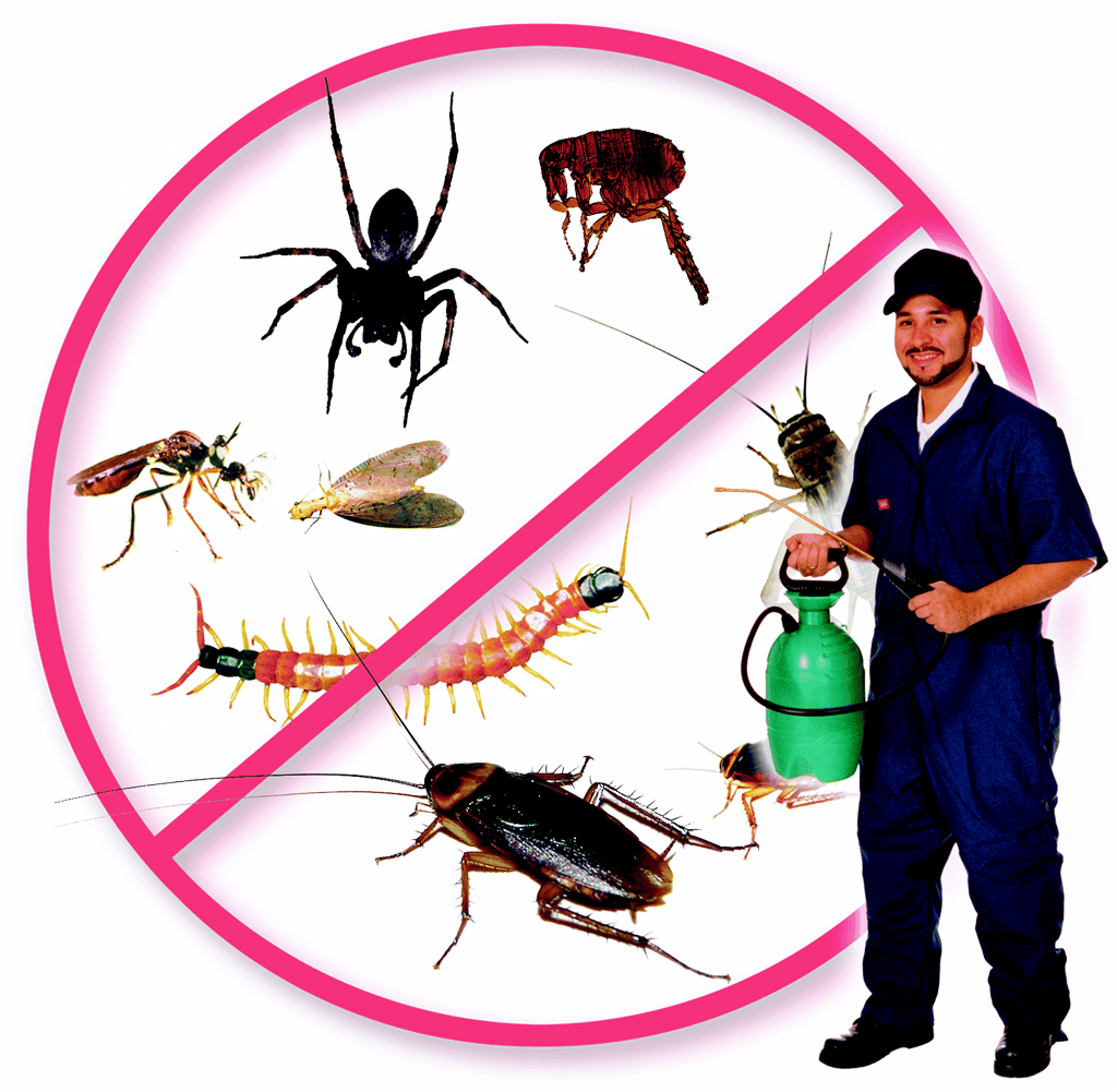 Master Pest Cockroach Control Melbourne