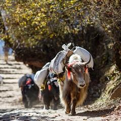 Travel Adventure Nepal Pty.Ltd.
