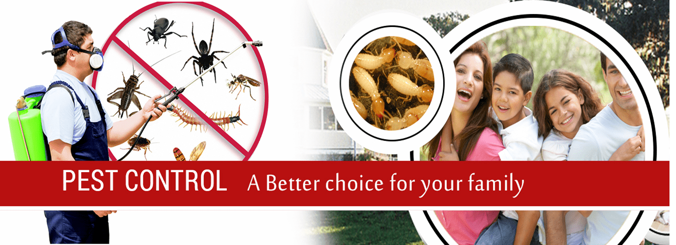 Bee Pest Control Canberra