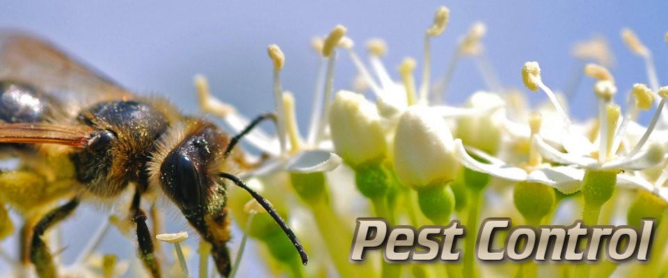 Emergency Pest Control Perth