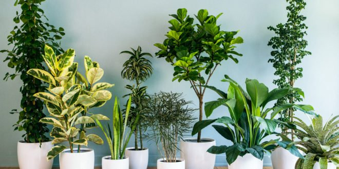 Foliage Indoor Plant Hire