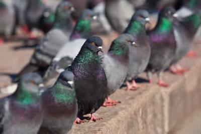 Statewide Pest Control Bendigo
