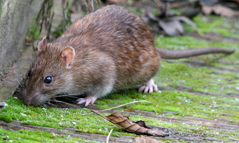 Female Choice Pest Control Brisbane