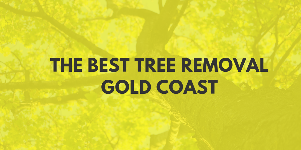 best tree removal gold coast banner