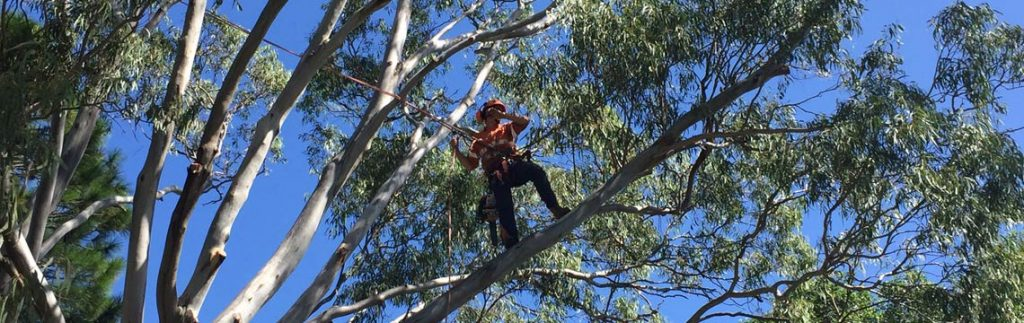 tree climb cutting