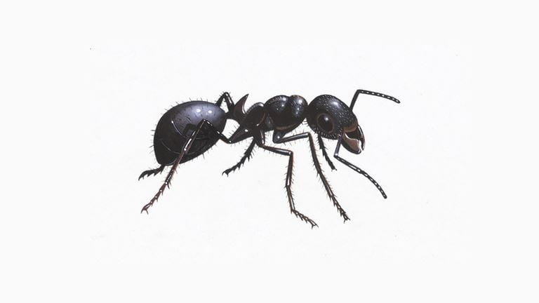 Fast Pest Control Melbourne