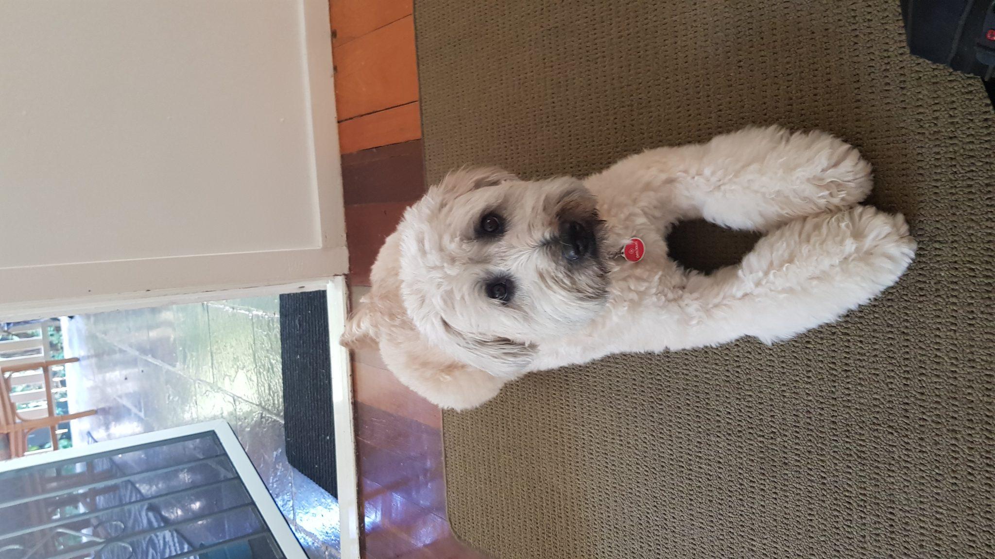 Precious Paws Dog Walking & Pet Sitting