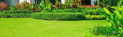 Premium Gekko Garden Maintenance Brisbane