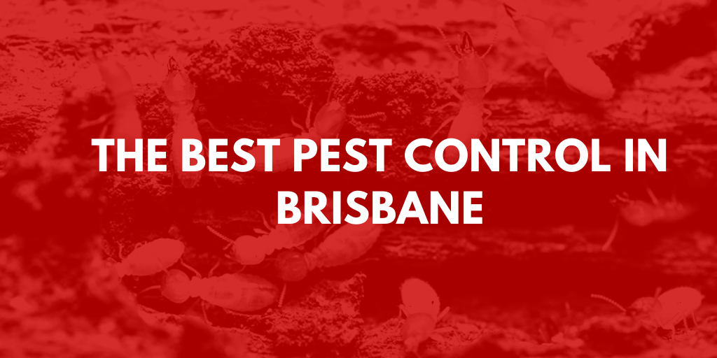 Best Pest Control Brisbane banner