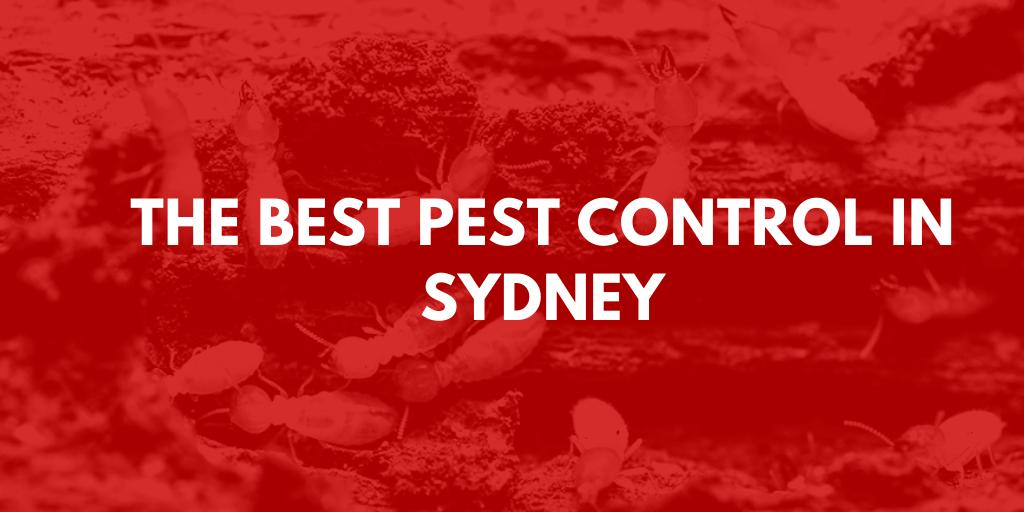 best pest control sydney banner