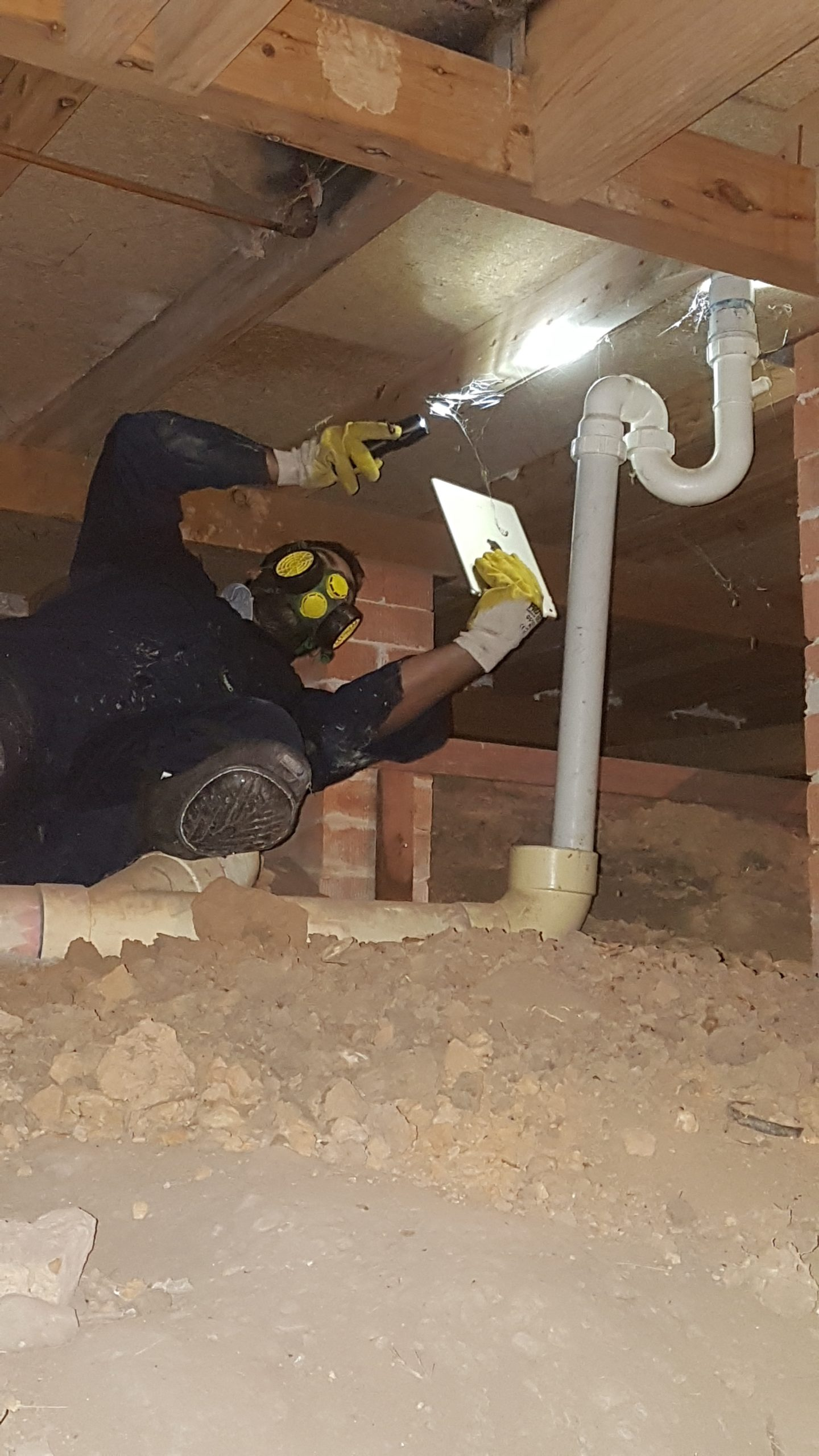Ground up building and pest inspection