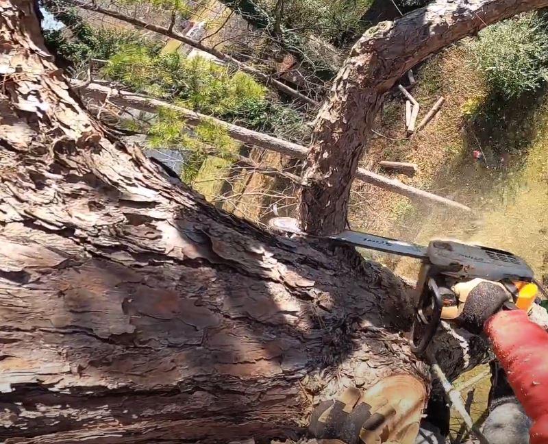 Tree Removal Toowoomba