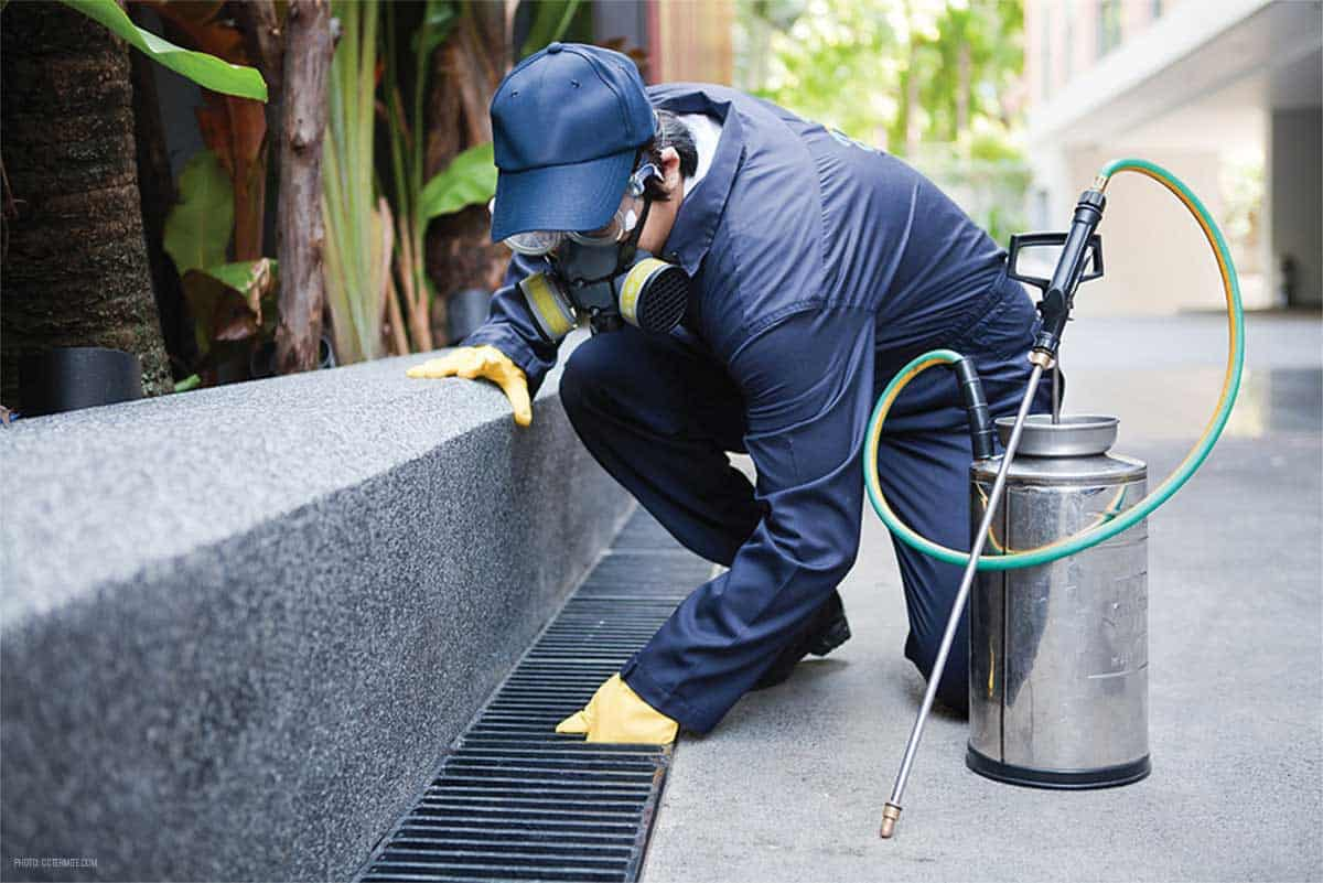 Eco Pest Control Brisbane